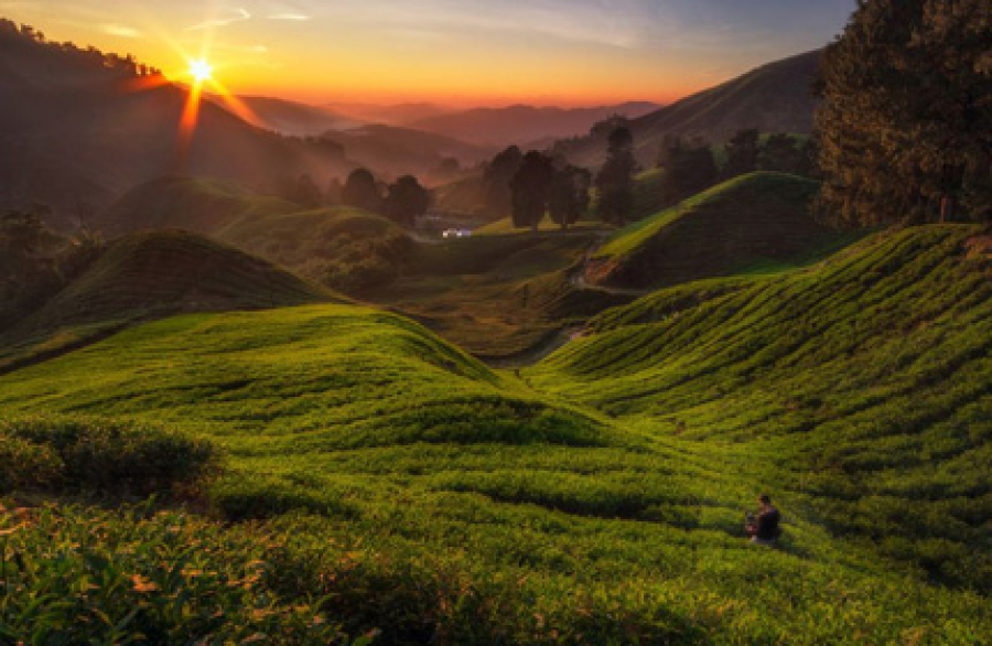 2 Days 1 Night Cameron Highlands